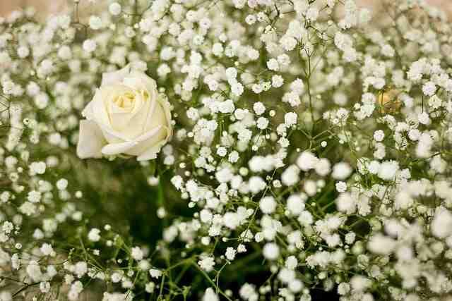 Baby's Breath Jenis Bunga Untuk Buket Pernikahan