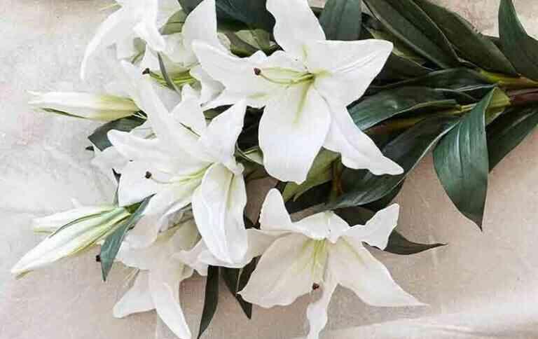 Bunga lili Jenis Bunga Untuk Buket Pernikahan
